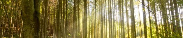 Mundo Forestal